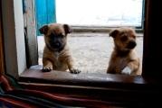 puppies at my door